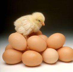 34个鸡蛋